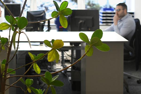 Buero-Arbeitsplatz-Pflanze