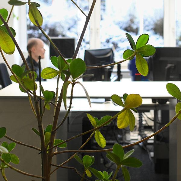 Team-Buero-Pflanze